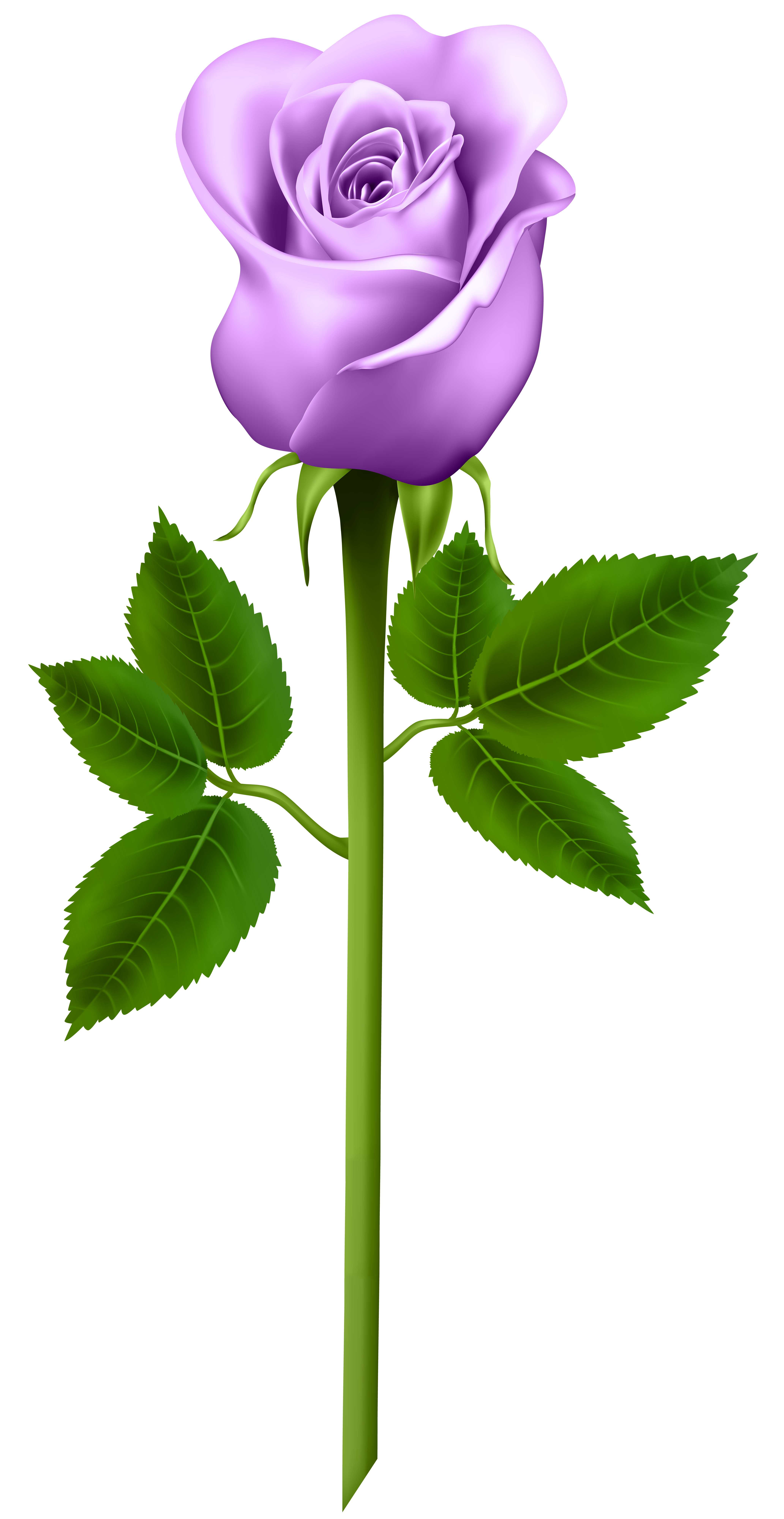 Purple Rose Transparent Png Image Free Download