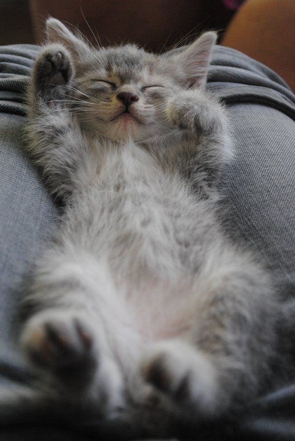 """""""Heaven must surely be a place that is lined with cat bellies."""" --Anonymous"""