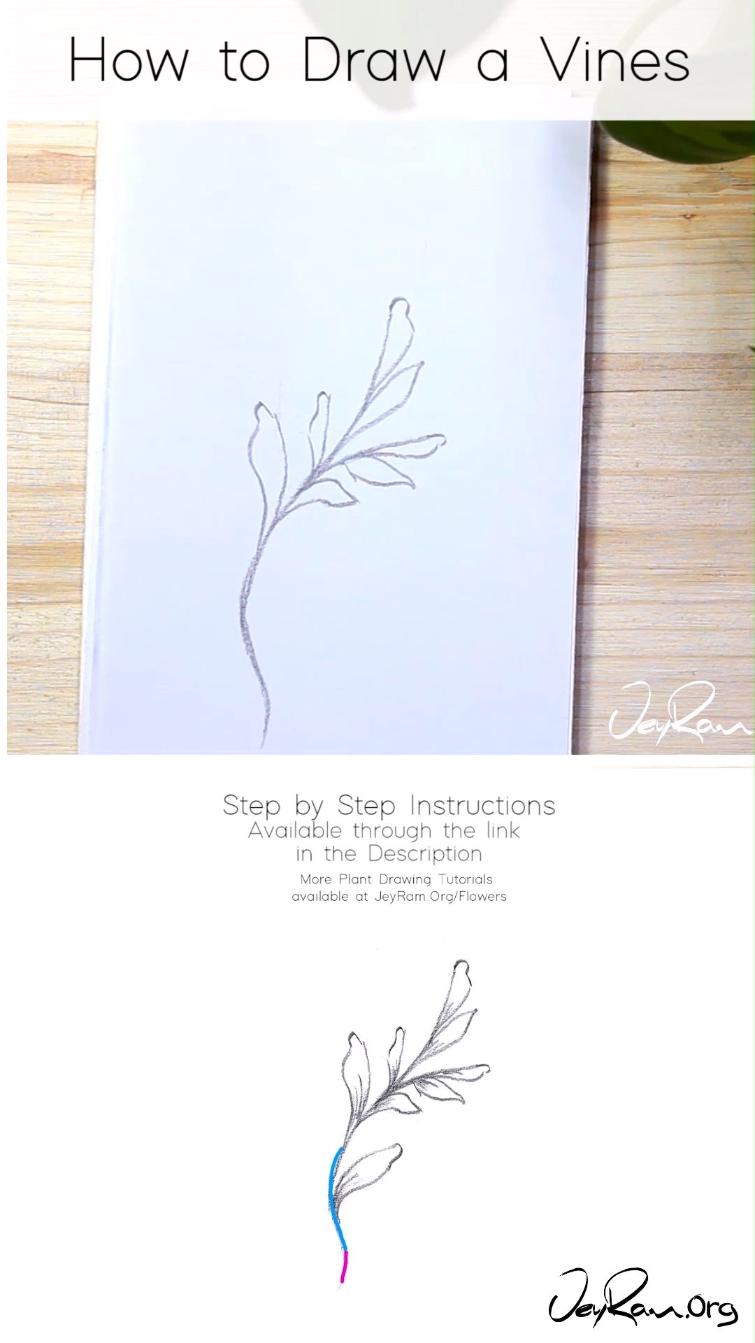 How to Draw Vines: Step by Step Tutorial  Learn how to draw vines with this simple step by step tutorial made for beginners. These pencil ske #draw #Step #tutorial #vines