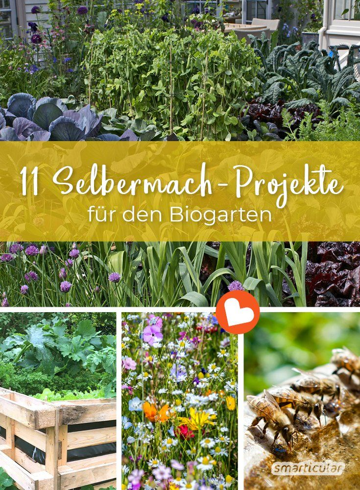 Photo of Organic garden: the 11 best do-it-yourself projects