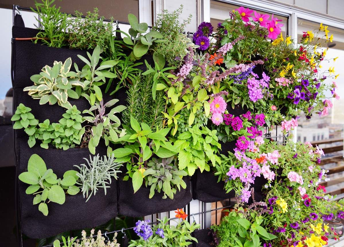Florafelt Vertical Garden Planters make Living Walls Easy. | สวน ...