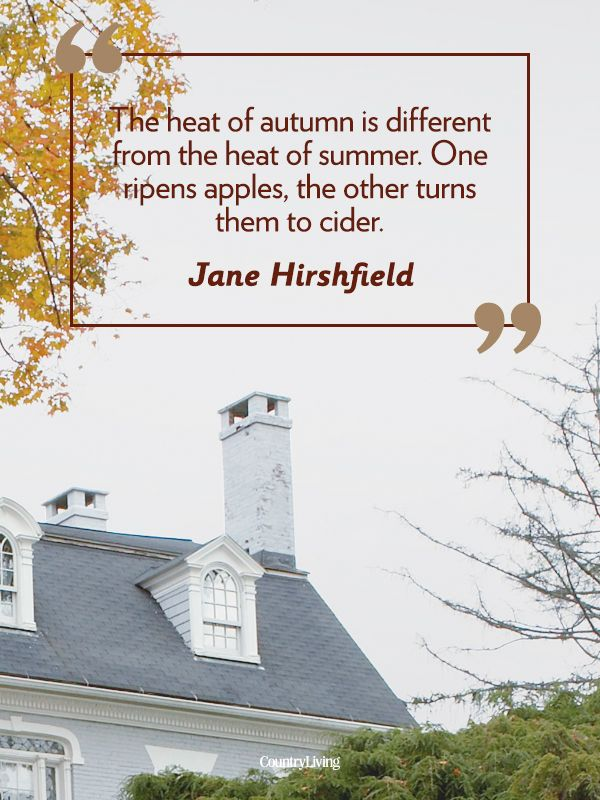 55 Fall Quotes To Remind You Just How Beautiful This Season Is Autumn Quotes Autumn Inspiration Seasons