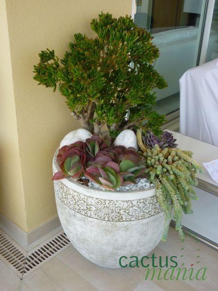 Composizione piante grasse cerca con google piante e - Composizione piante grasse giardino ...