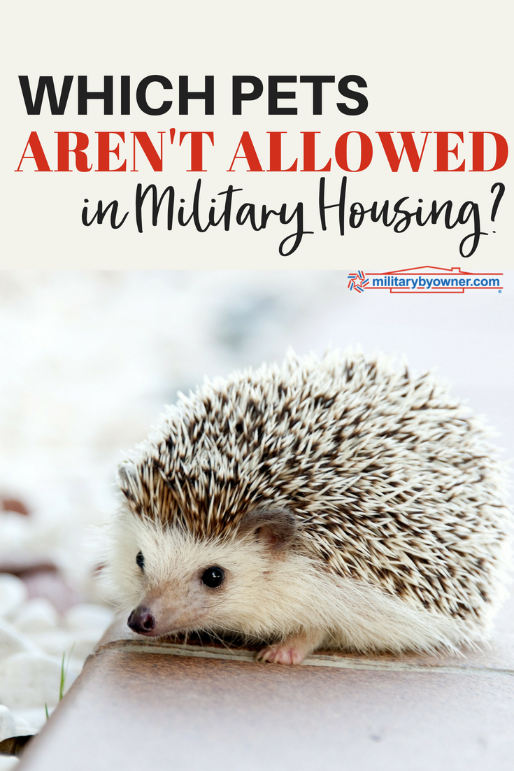 Which Pets Aren't Allowed in Military Housing? Military
