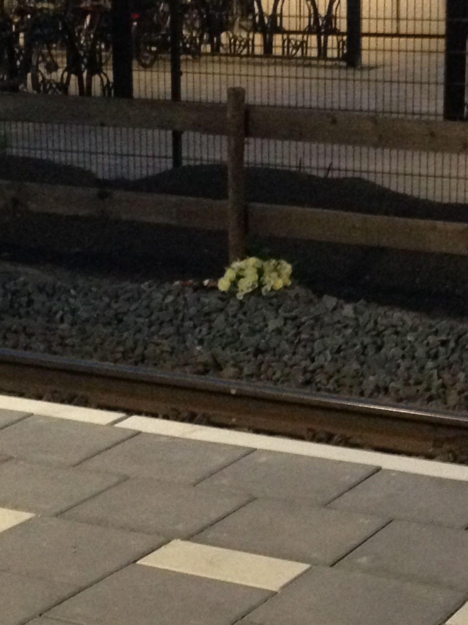 Hier was een vrouw voor de trein gesprongen...dochter legde net een bloemstuk neer