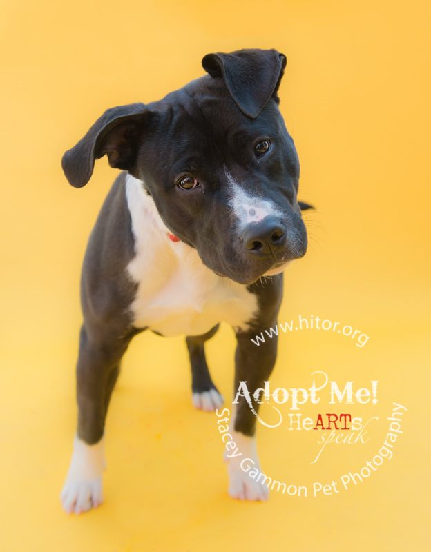Adopt Ranger From Hi Tor Animal Care Center In Pomona New York Photo By Stacey Gammon Pet Photography Fotos De Animales Sesion De Fotos Foto