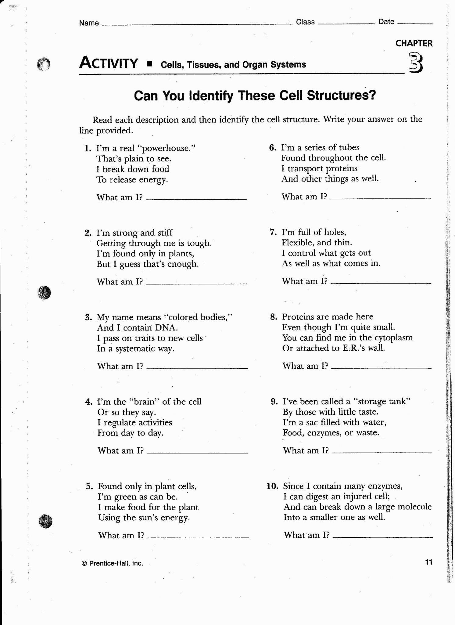 Cell Organelles Worksheet Middle School Cellular Transport