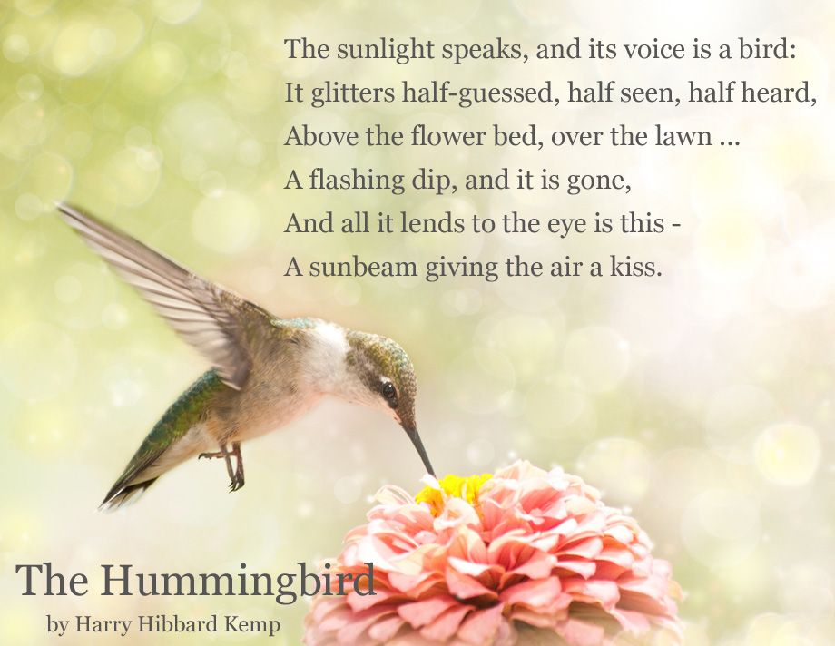 Hummingbird Card Saying Bing Images Projects Pinterest