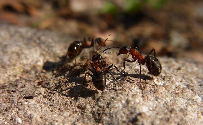 Épinglé sur Anti fourmis maison