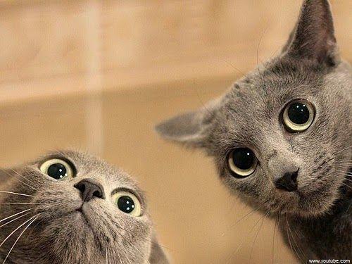 Image De Chat Rigolo image chat rigolo | les chats | pinterest | funny cats, cats et