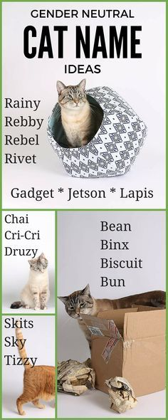 Cat Name Ideas That Are Gender Neutral Cat Names Funny Cat Names Gender Neutral
