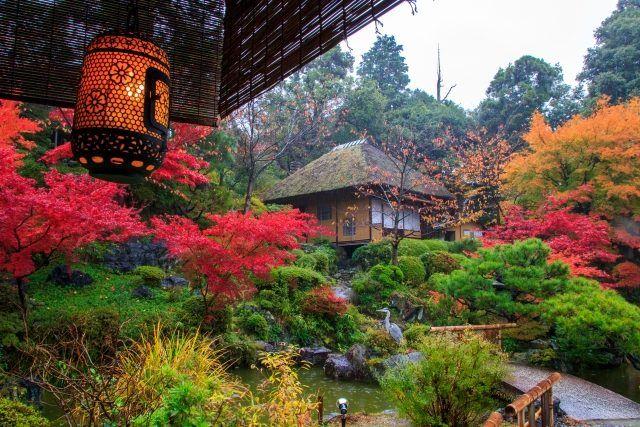 Japanischer Garten Rot Grün Kontraste Teich Brücke