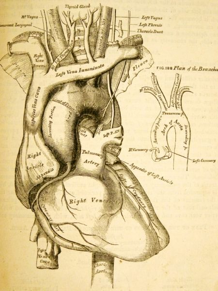 Anatomy Descriptive And Surgical 1858 By Henry Gray Https