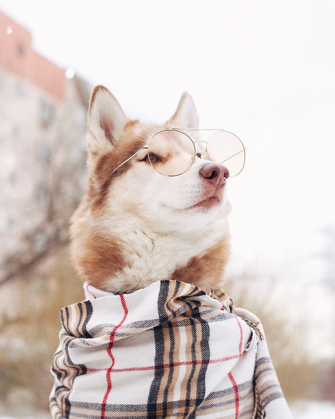 Huskey With Sunglasses Cute Dogs Dogs Stylish Dogs