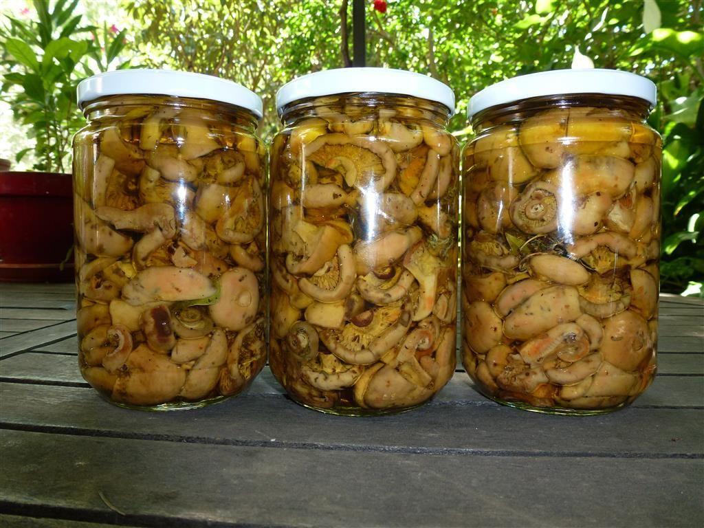 Champignons au vinaigre et à l'huile | Recettes de cuisine, Conservation légumes et Champignon ...