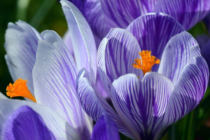 Selección del Editor - Fotos | Naturaleza | Pinterest | Naturaleza