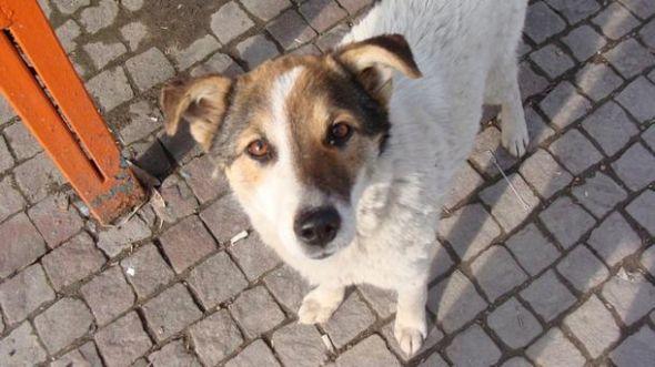 Zashitnichka Na Zhivotnite Osdi Varnenska Mediya Za Kleveta Snimki Animals Corgi Dogs