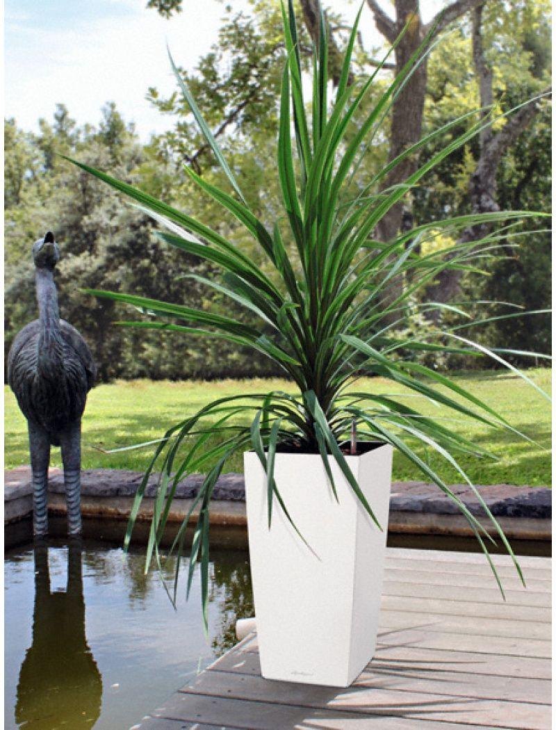 Lechuza Trend : Pot de fleur Cubico color blanc à reserve d\'eau ...