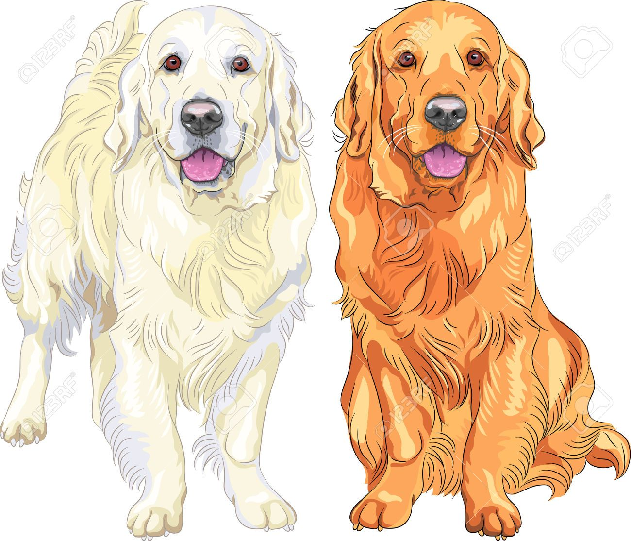 Golden Retrievers Cliparts Stock Vector And Royalty Free Golden