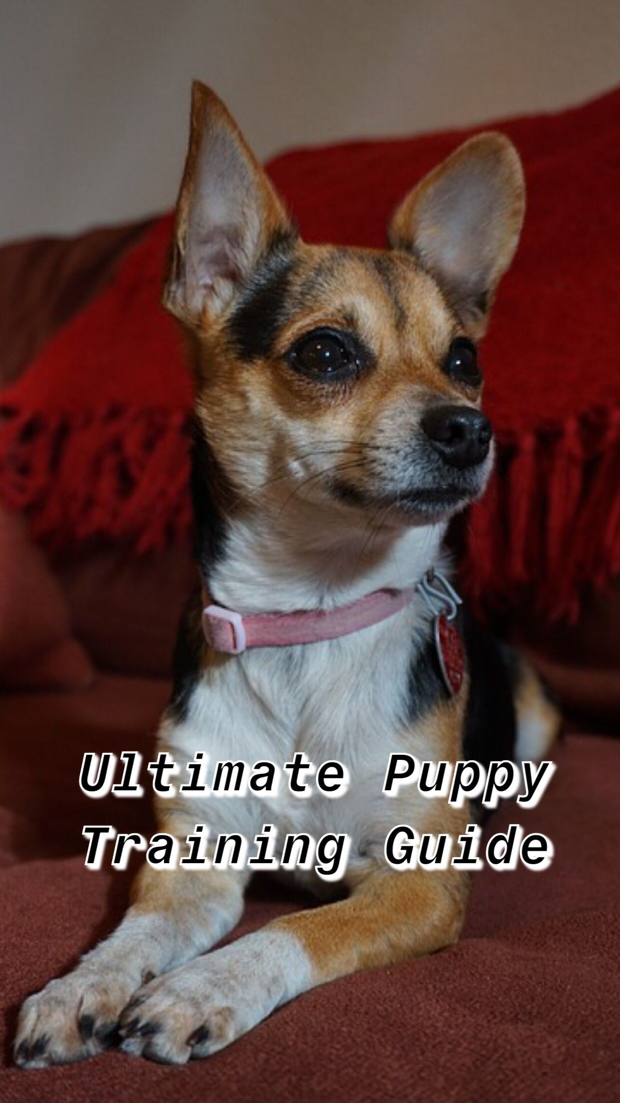 Dog Training Come Dogs Training Puppy Ideas Puppy Toys Puppy