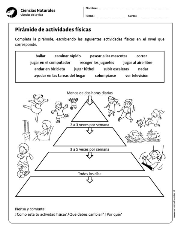 Pirámide de actividades físicas | anatomia Humana colorear | Pinterest