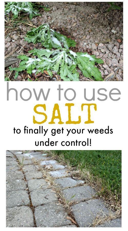 how to use salt to control weeds gardens and growing pinterest unkraut garten und pflanzen. Black Bedroom Furniture Sets. Home Design Ideas