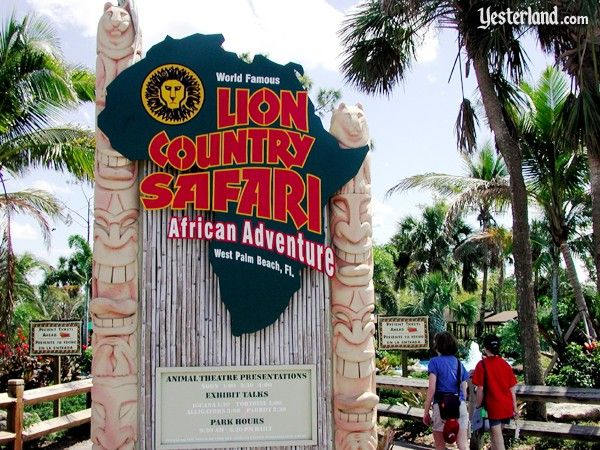Took My Hubby On An African Lion Safari In West Palm Beach Florida Soon For The Real Thing