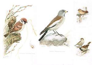 Vans Unisex Authentic Skate Shoe Bird Prints Prints Vintage Colors