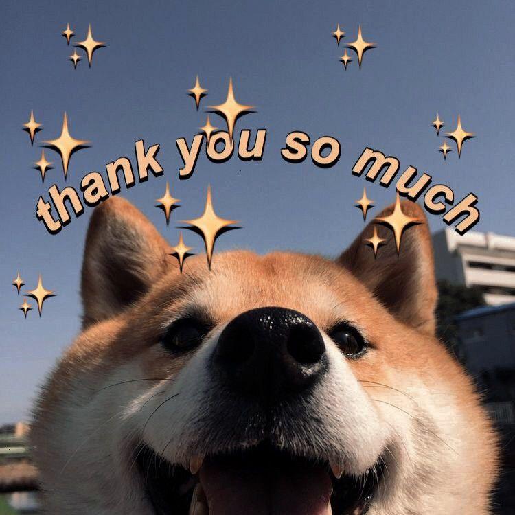 Wholesomememes Wholesome Shibainu Thank Much Meme You Uwu