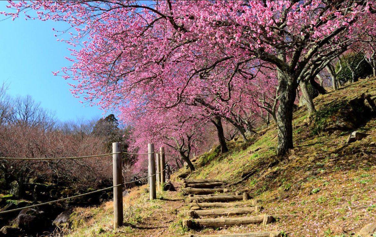 Inilah 12 Wallpaper Pemandangan Alam Terindah Di Jepang HD