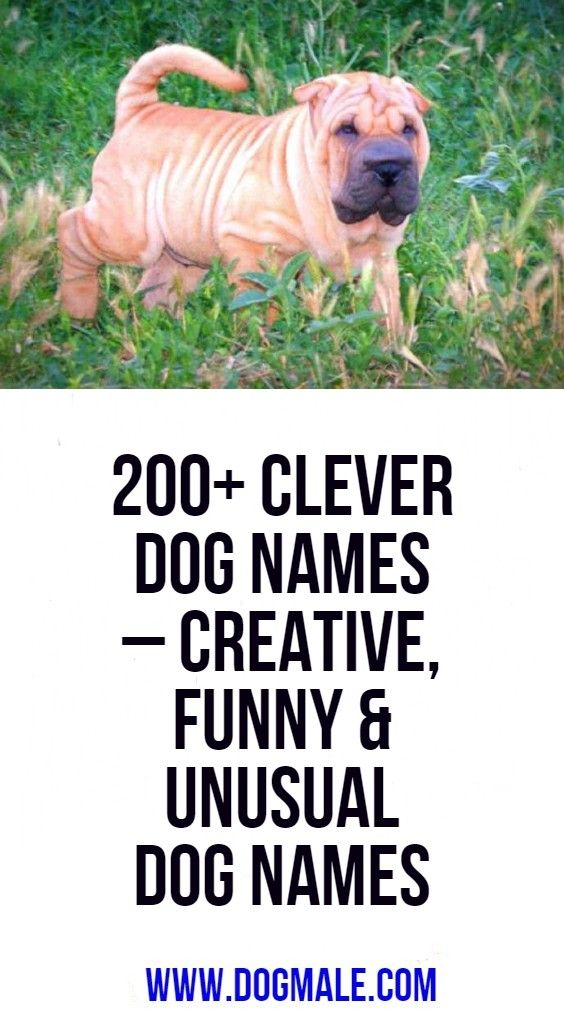 200+ Clever Dog Names Creative, Funny & Unusual Dog