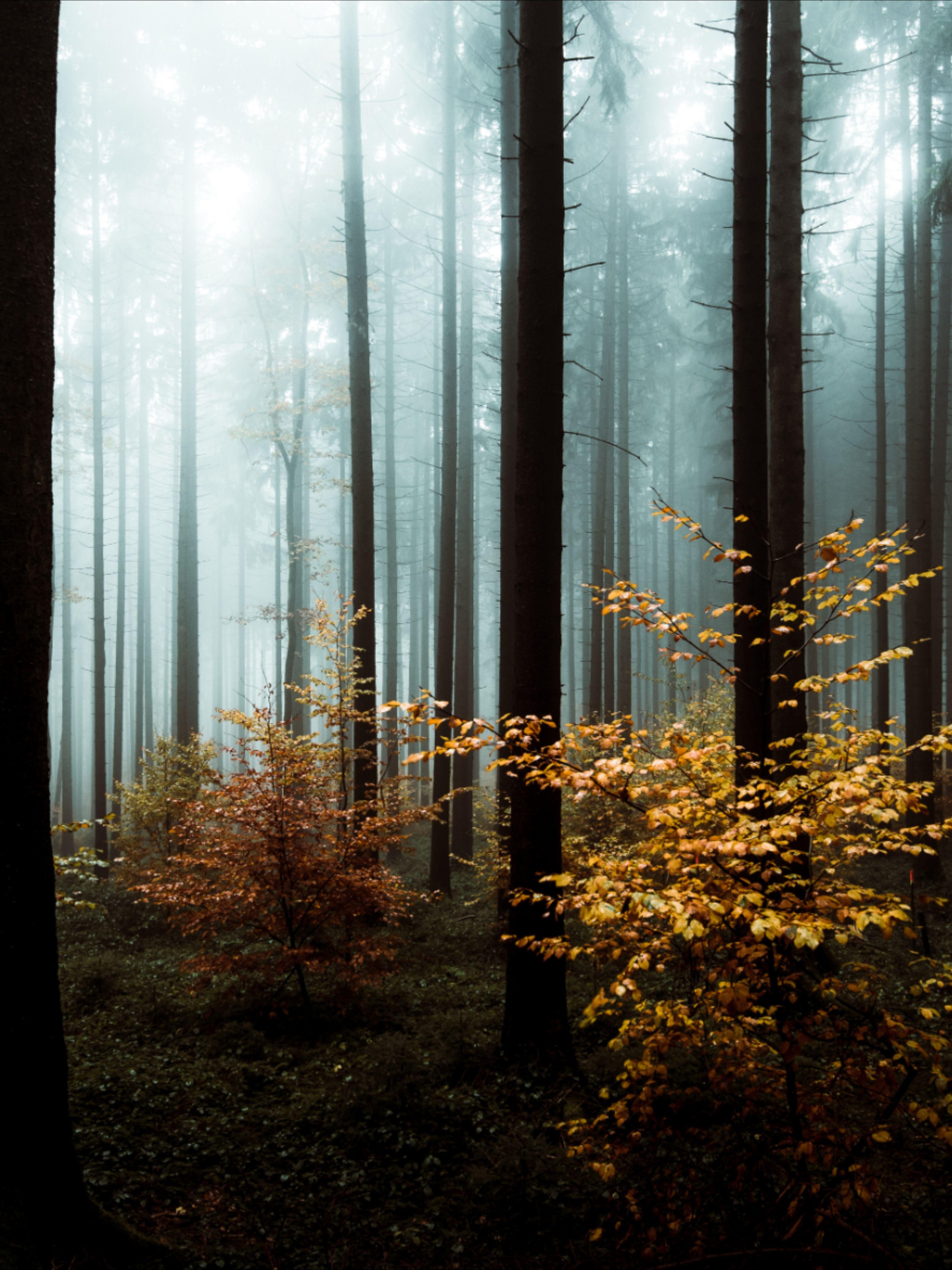 Dark Moody Lightroom Presets For Landscape Photography Lightroom Presets Landscape Photography Landscape