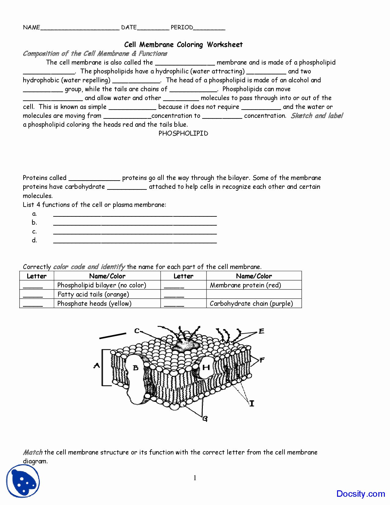 31 Cell Membrane Coloring Worksheet Key