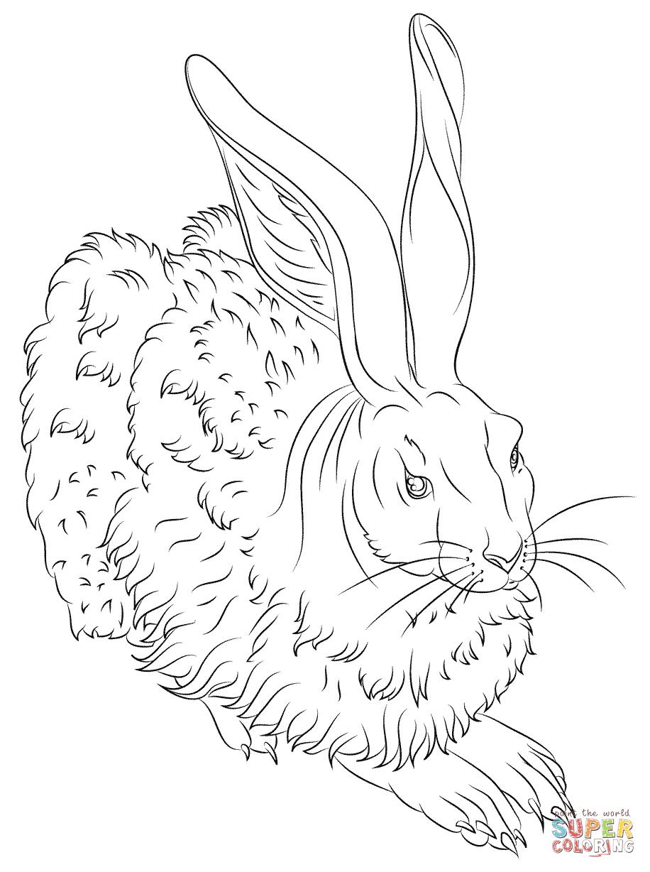 """Der Feldhase"""" von Albrecht Dürer  Super Coloring  Hase zeichnen"""