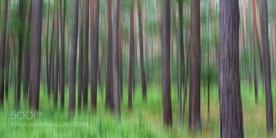 Abstract Forest In einem Waldstück bei Nürnberg - als mir die Kamera aus der Hand viel ;-)