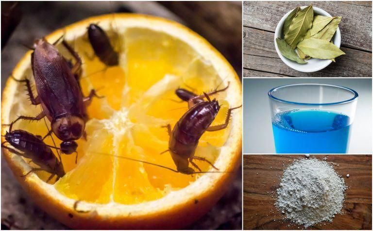 How To Get Rid Of Cockroaches 11 Home Remedies That Really Work Home Remedies For Cockroaches Home Remedies For Roaches