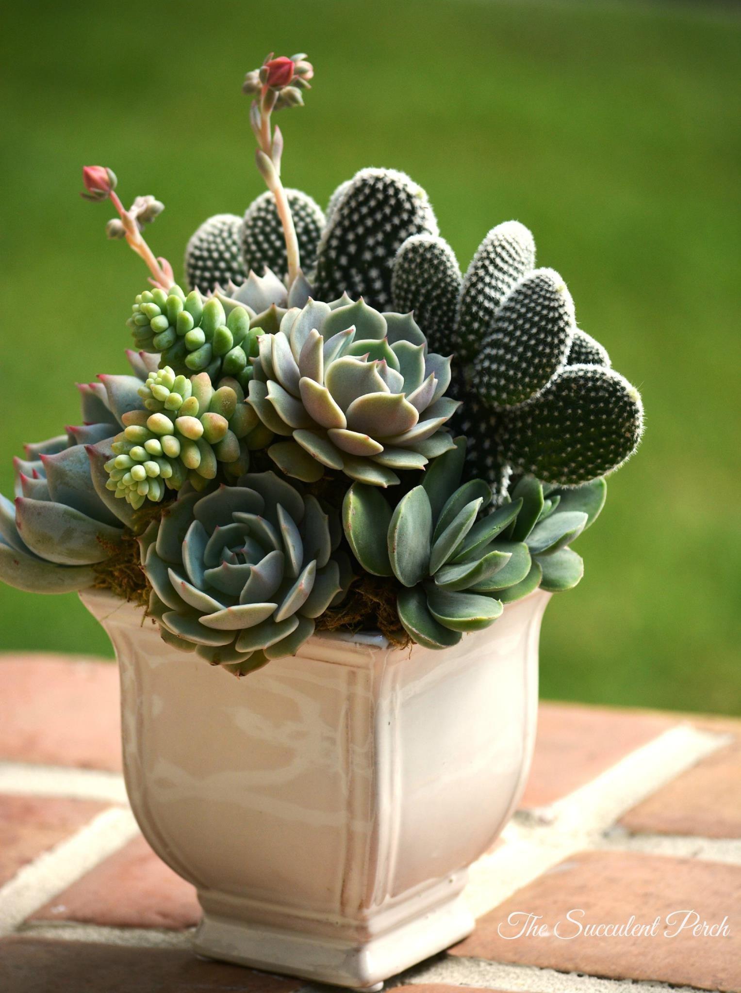 Arreglo De Cactus Y Suculentas