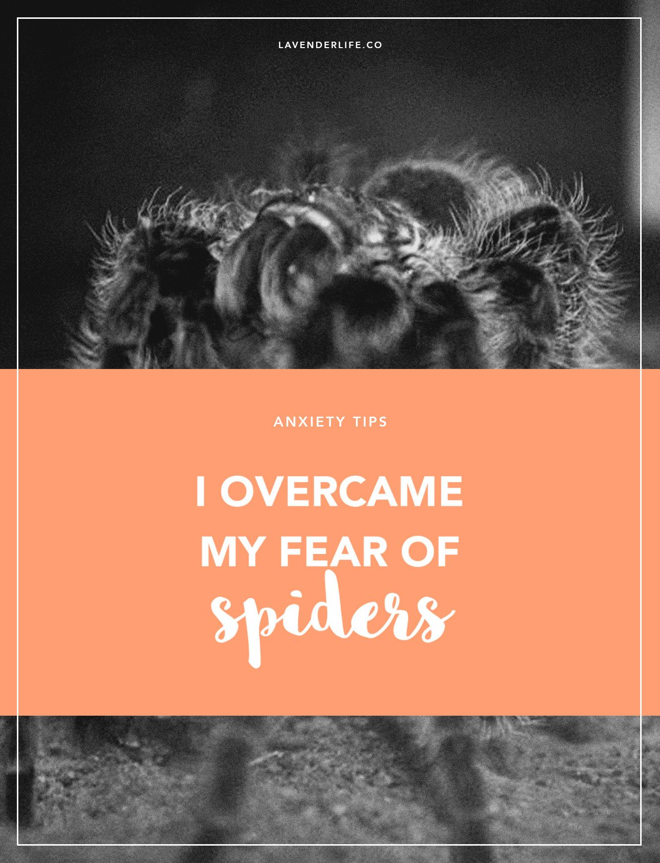 I overcame my arachnophobia!   Life   Phobias, Overcoming