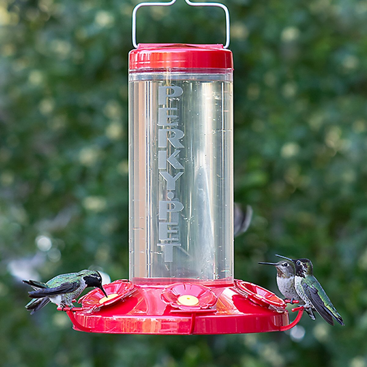 Grand Master Plastic Hummingbird Feeder In 2020 Humming Bird Feeders Feeder Wide Mouth Bottle