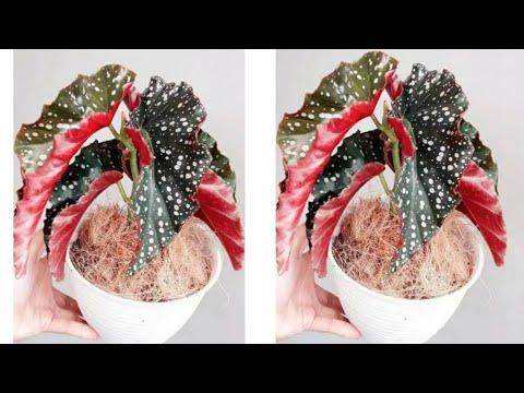 Cara Membuat Tanaman Dari Plastik Kresek How To Make Plant From Plastic Bag Youtube In 2020