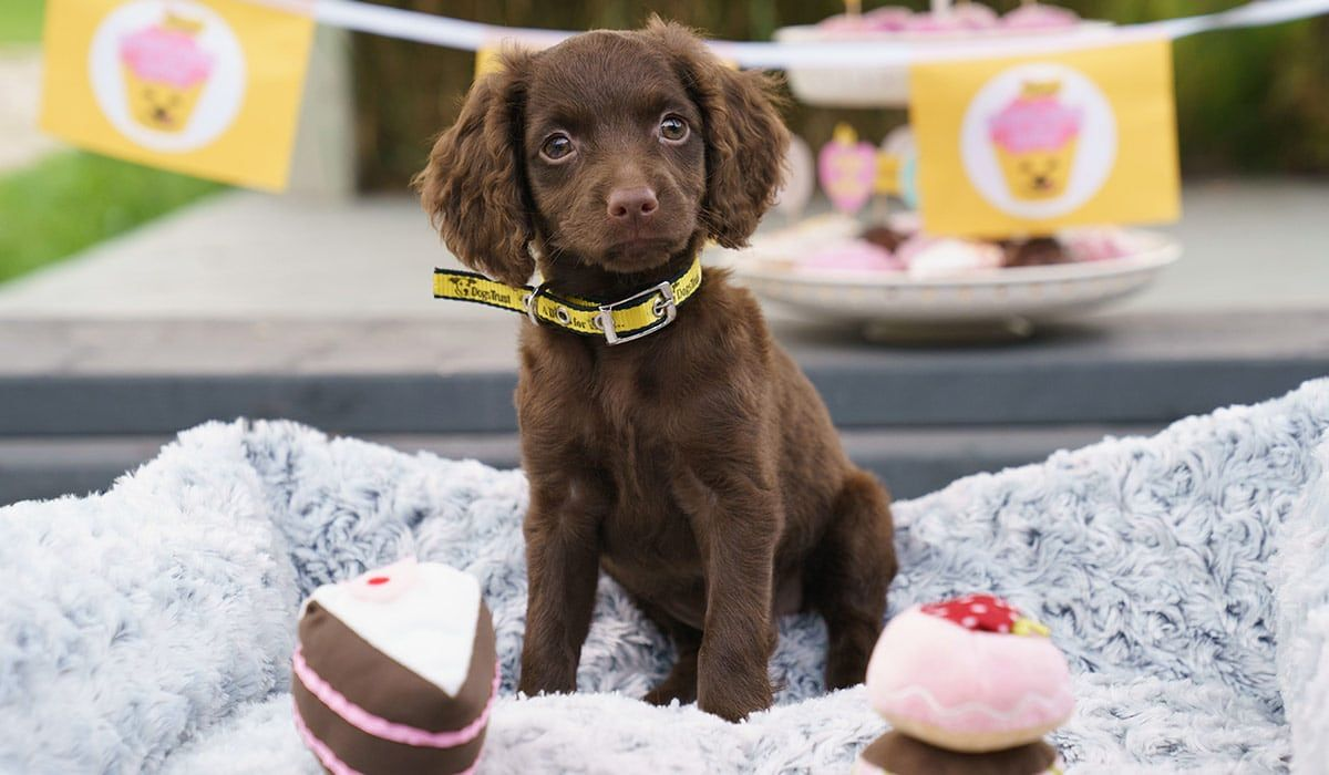Pet Website Takes On The Irish Puppy Farming Industry Ireland Has A Horrible Reputation As The Puppy Farming Animal Rescue Center Puppies Designer Dogs Breeds