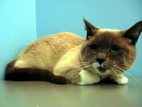 This Handsome Feline Is Benny Benny Is A Sweet Cat With A Shy Demeanor It Will Take Benny A Little Extra Time To Adjust To His Ne Humane Society Cats Pets