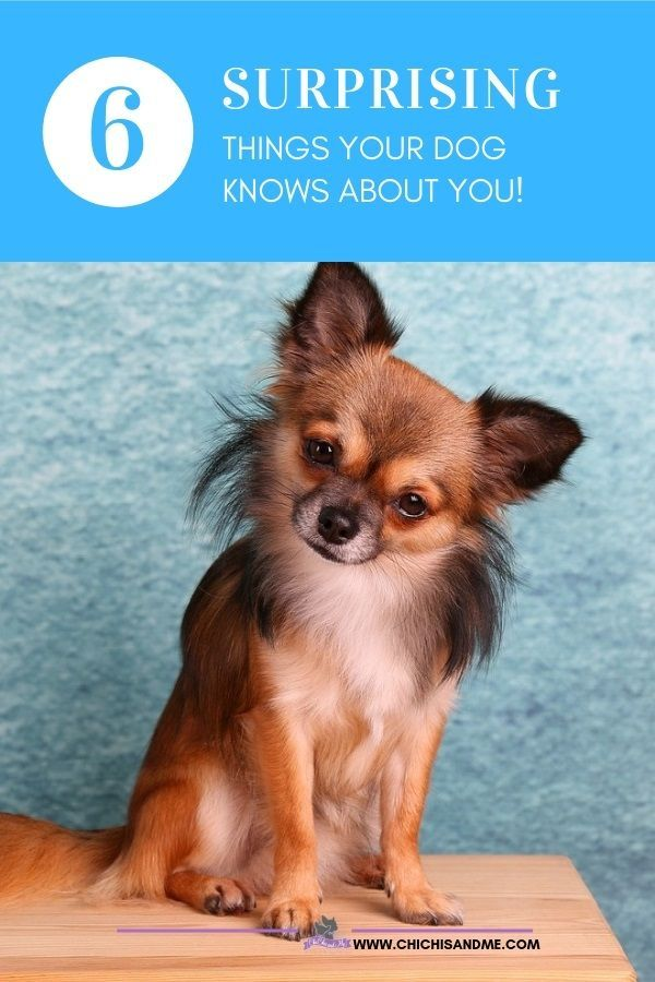 6 Astonishing Secrets Your Dog Knows About You Dogs Neutering Dogs Dog Care 101