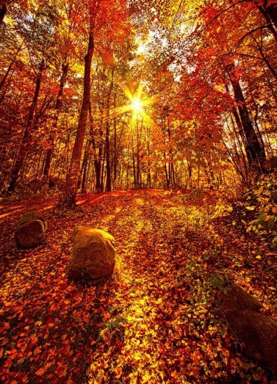 Fall Pumpkin Background Wallpaper Beautiful Fall Scenery Autumn Scenery Nature
