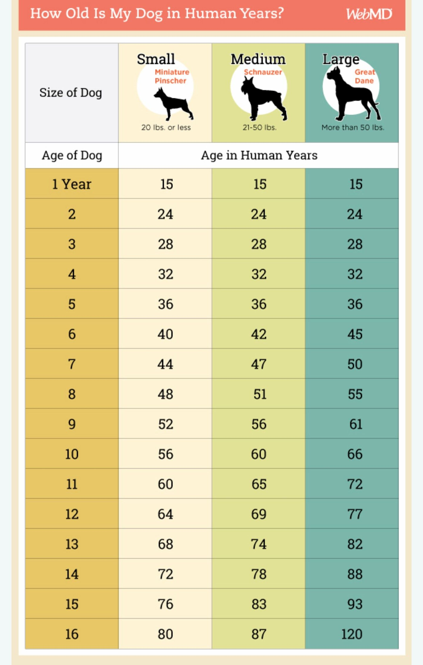 Dog Age Chart Dog Ages Dog Age Chart Dog Care