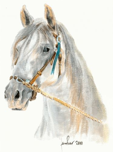 Dibujo de color para imprimir : Animales - Caballo numéro 433149 ...