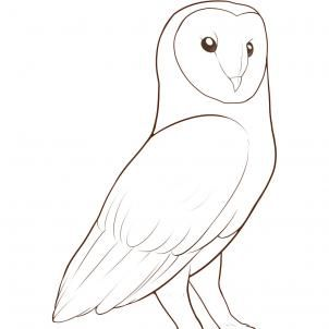 How to Draw a Barn Owl Step by Step Birds Animals FREE Online