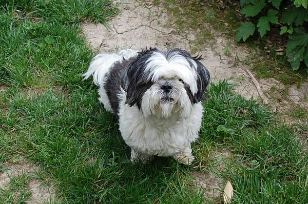Pin by US LOST DOG REGISTRY on LOST AND FOUND PETS | Losing a dog