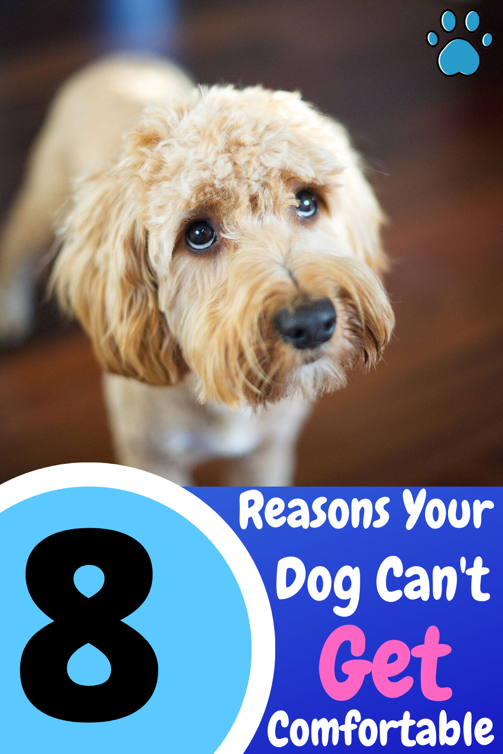 Dog Won T Lay Down 8 Common Reasons Why How To Fix It In 2020 Dog Care Checklist Puppy Health Dog Health