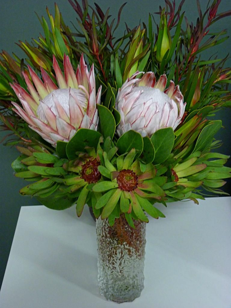 Proteas Gardening Beautiful Plants And Trees Protea Bouquet Australian Native Flowers Flowers